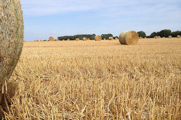 bauer-lange-landwirtschaft
