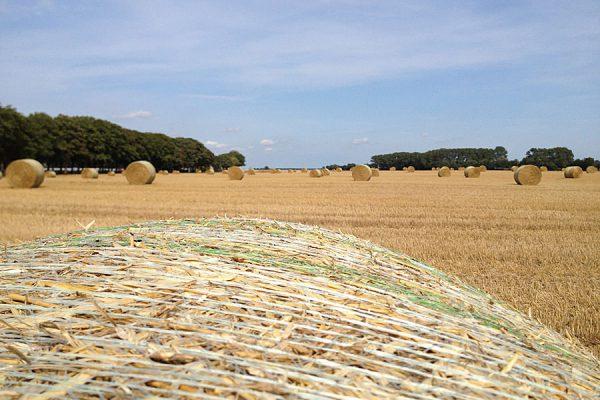 bauer-lange-ruegen-landwirtschaft