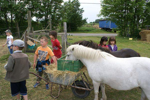 Tiere streicheln auf dem Bauernhof in Lieschow auf Rügen