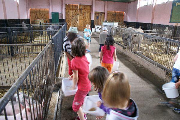 Tiere füttern auf dem Bauernhof in Lieschow auf Rügen