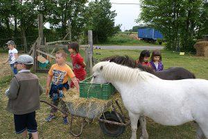 Bauernhofurlaub auf der Insel Rügen bei Bauer Lange in Lieschow neben Ummanz