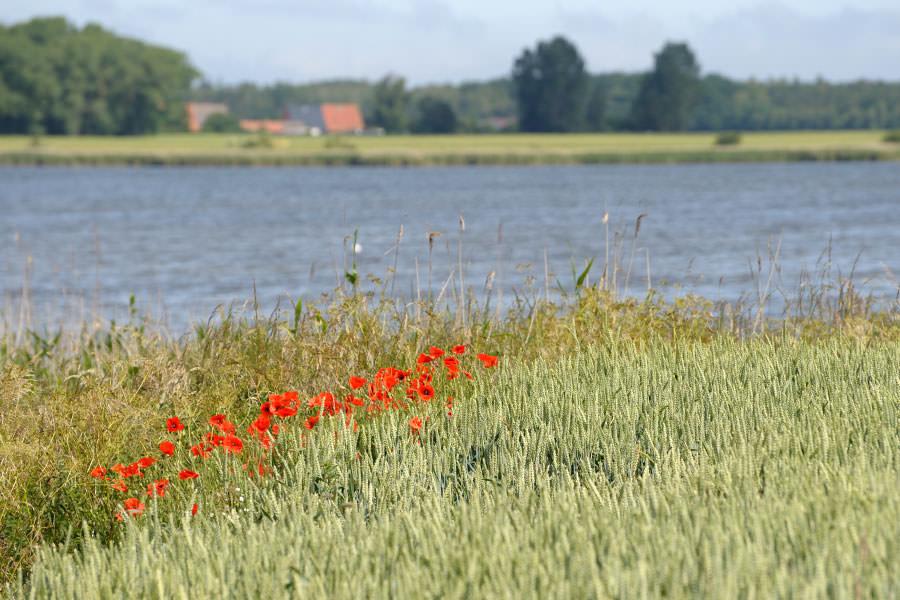 Rügen-Urlaub buchen bei Bauer Lange in Lieschow auf der Halbinsel Ummanz